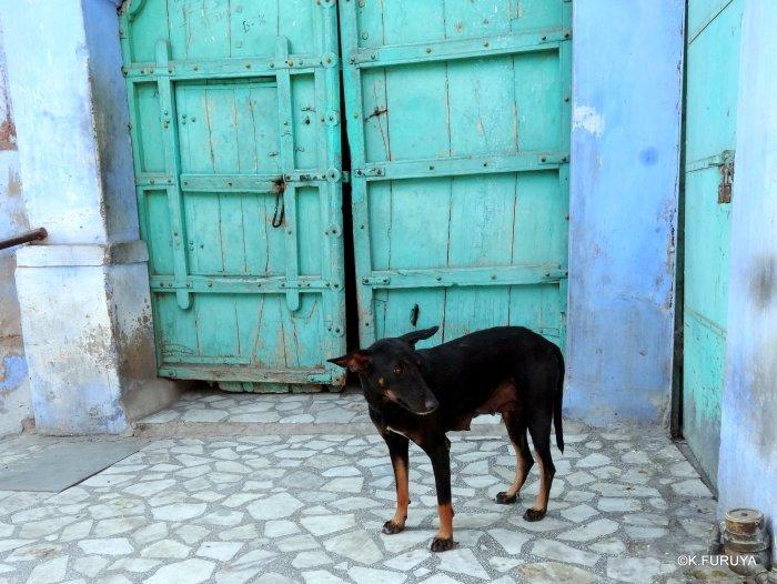 インド・ラジャスタンの旅 7 ブルーシティ_a0092659_18575328.jpg