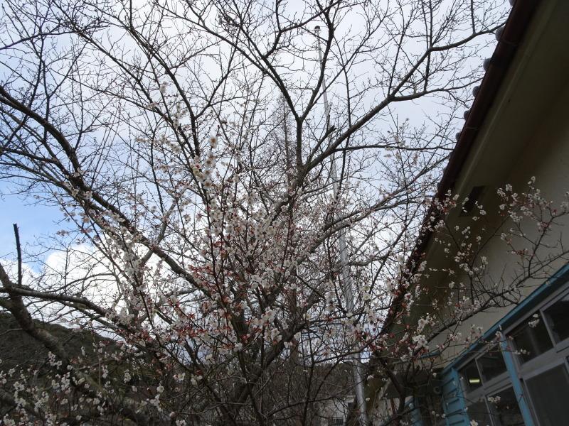 寒風の中屋根葺き作業継続中 in 孝子の森     by     (TATE-misaki)_c0108460_18301296.jpg