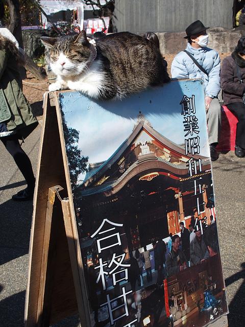 湯島天神 梅まつり & 落ちない猫(^^ (2016/2/16)_b0006870_20254514.jpg