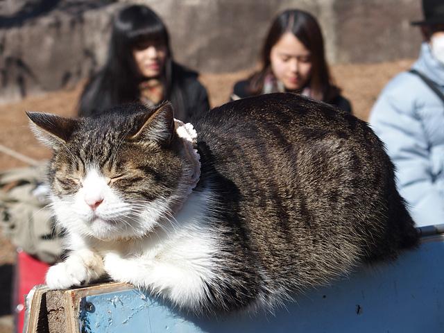湯島天神 梅まつり & 落ちない猫(^^ (2016/2/16)_b0006870_2025578.jpg