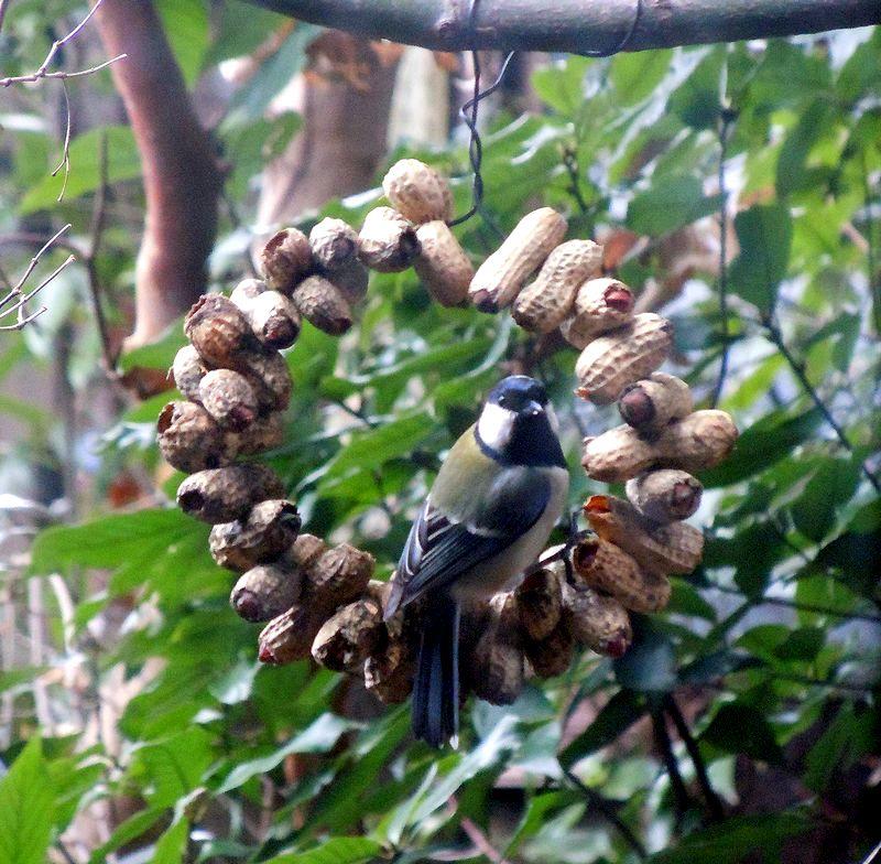 ■ピーナッツリースに小鳥がね^^_f0141979_22563447.jpg