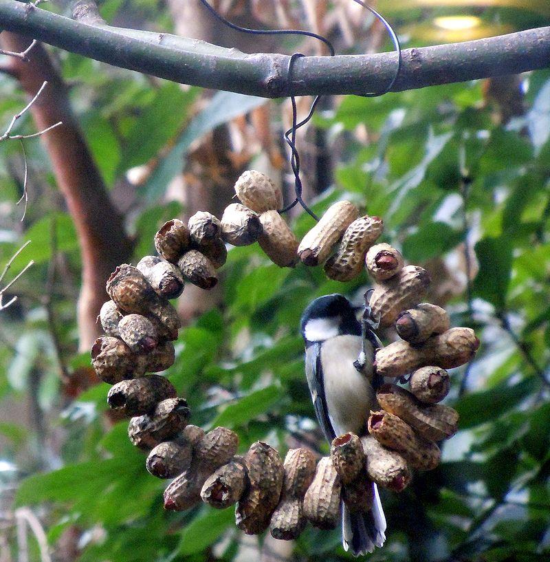 ■ピーナッツリースに小鳥がね^^_f0141979_22564578.jpg
