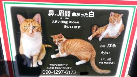 猫を探しているかたがいらっしゃいます_f0228680_930135.jpg