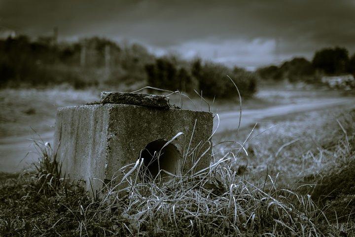 哲学的な気分になれる冬の散歩道_d0353489_20382895.jpg