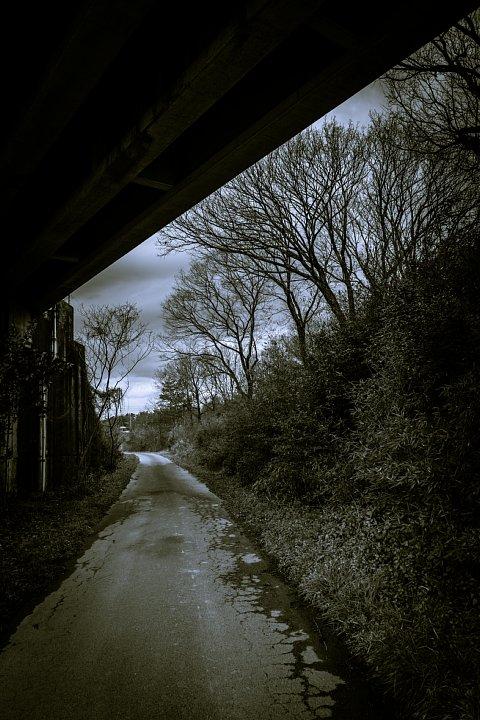 哲学的な気分になれる冬の散歩道_d0353489_2041265.jpg