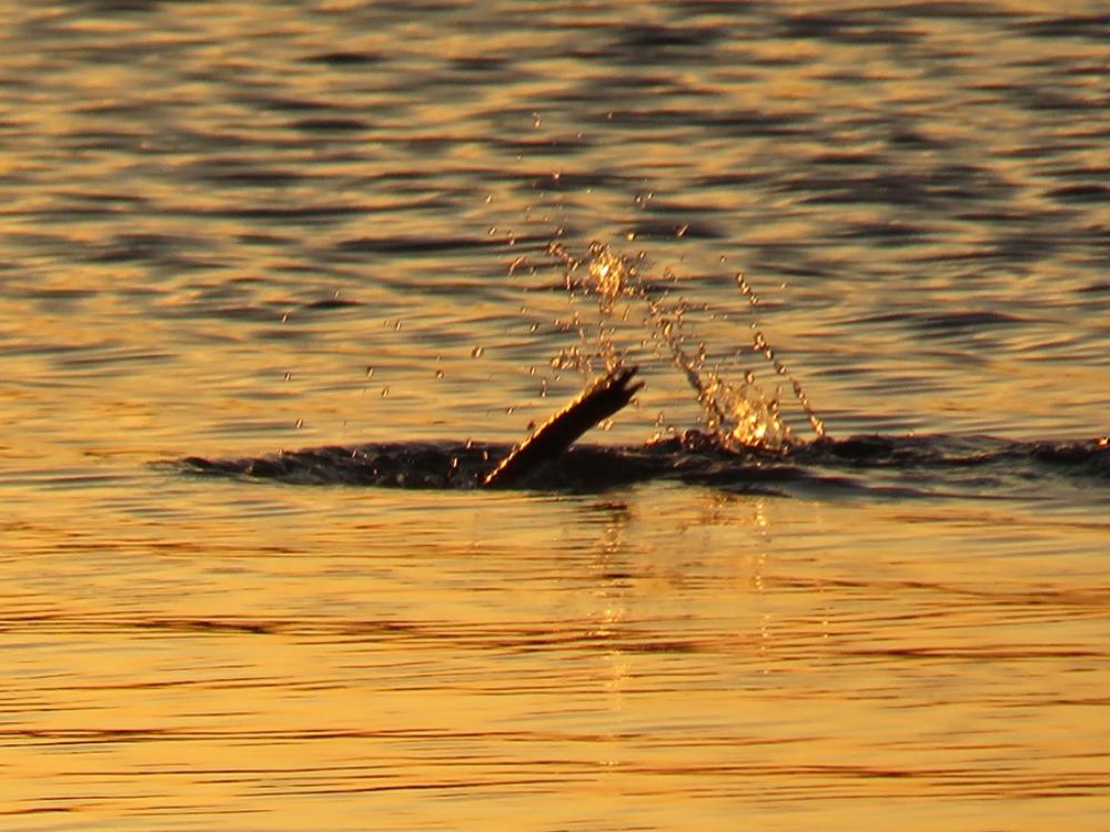 朝の海 (*^_^*)_c0049299_22184258.jpg