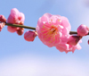 私らしく春を先撮り!「小さい春、み~つけた!」