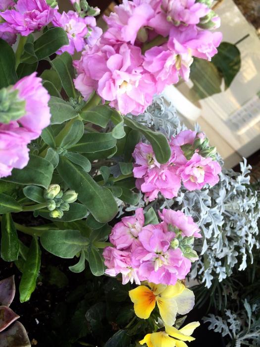 春に近づいていますね〜〜!_b0176010_11123978.jpg