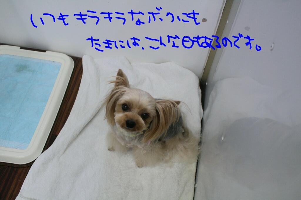b0130018_17564219.jpg