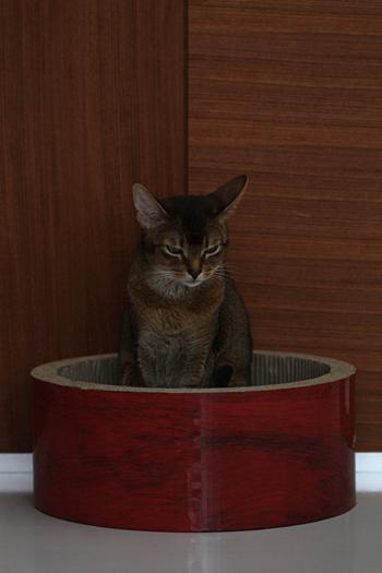[猫的]反省猫?いじけ猫?_e0090124_0121050.jpg