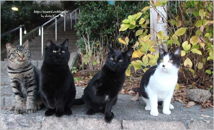 今日の外猫さん_f0166234_18525665.jpg