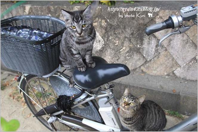 今日の外猫さん_f0166234_18545174.jpg