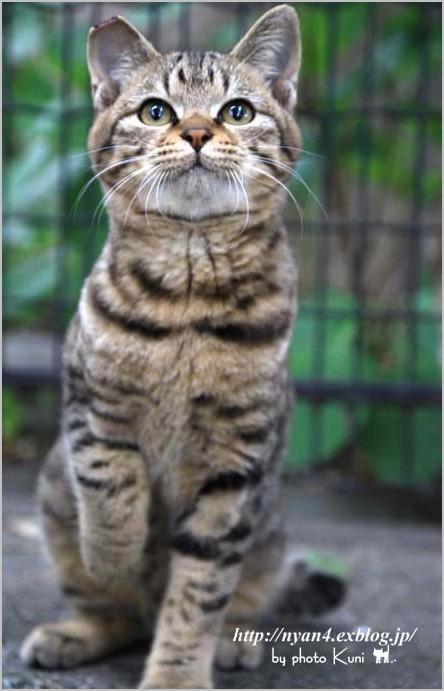 今日の外猫さん_f0166234_18591960.jpg