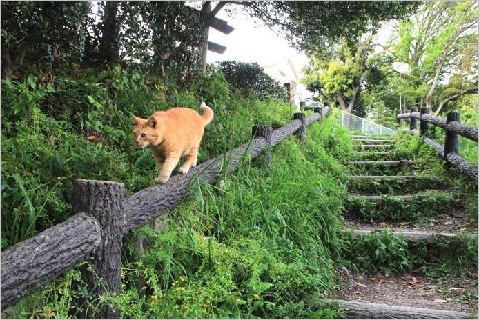 今日の外猫さん_f0166234_19174629.jpg