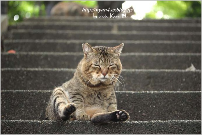 今日の外猫さん_f0166234_1922188.jpg