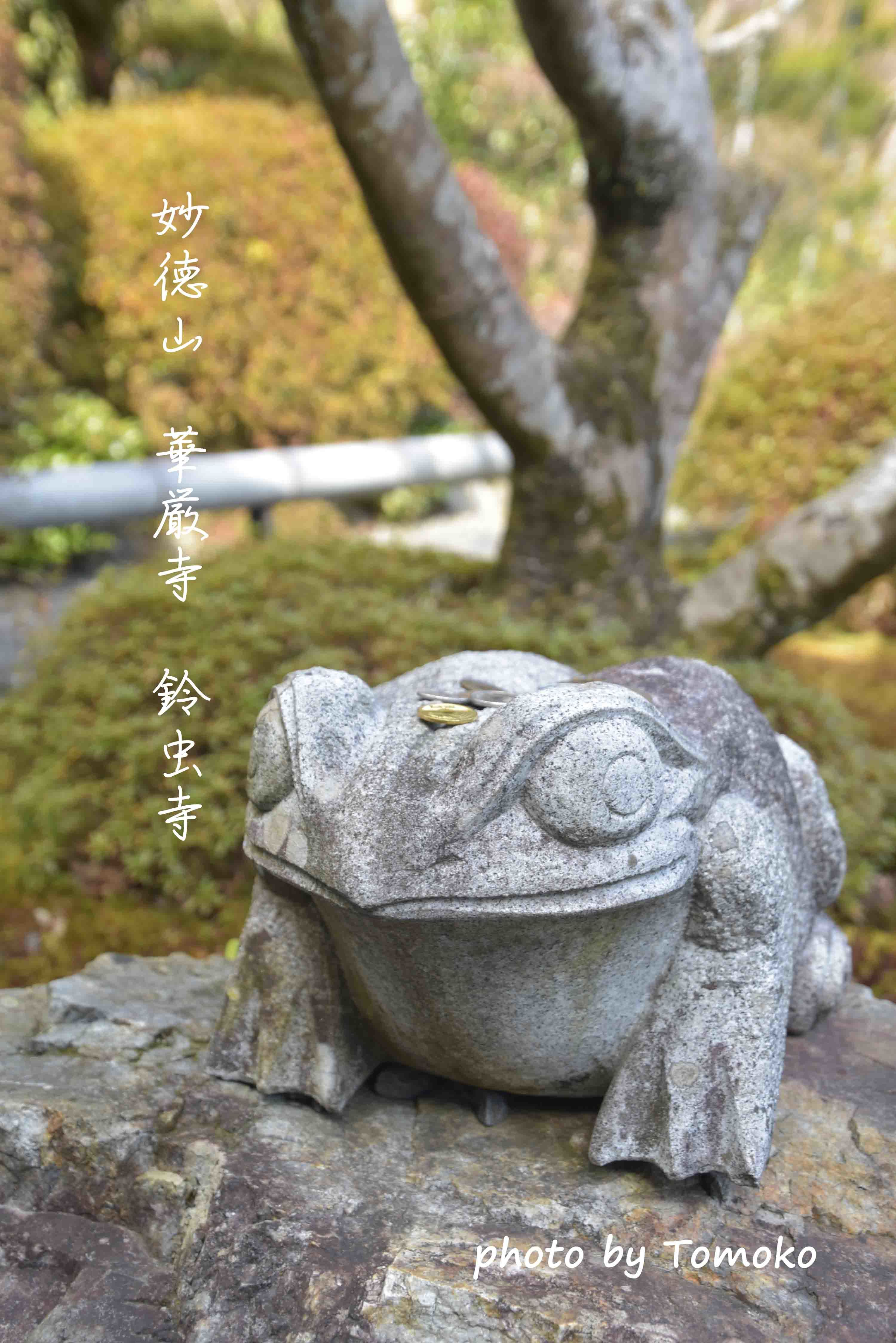 日帰り京都♪(鈴虫寺)_c0345348_22020482.jpg