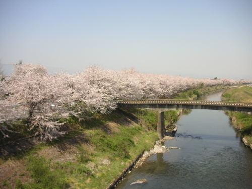 まだまだ寒いですが、4月の『お花見ポタリング』のイベント企画の案内です。_b0332867_14563083.jpg