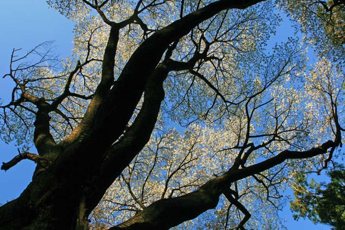 散策路から仲睦まじい夫婦桜の姿が2・16六国見山臨時手入れ_c0014967_93577.jpg