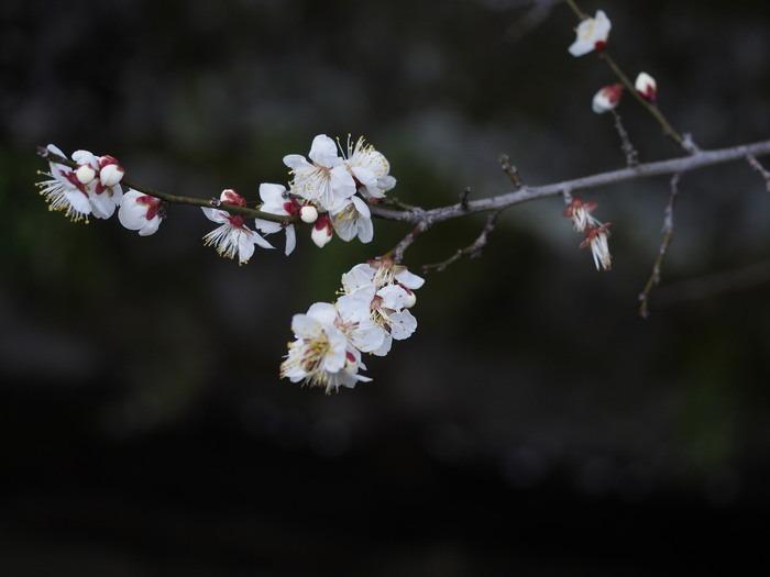 吉野ヶ里の田園_a0149488_18404187.jpg