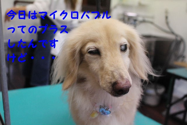 b0130018_19493495.jpg