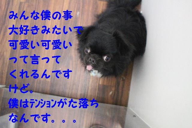 b0130018_200396.jpg