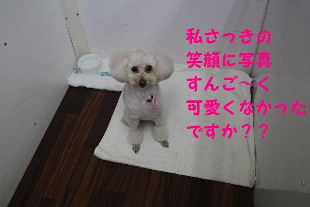 b0130018_20113493.jpg