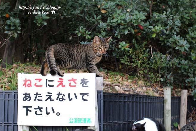 今日の外猫さん_f0166234_14342298.jpg