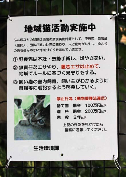 今日の外猫さん_f0166234_23132123.jpg