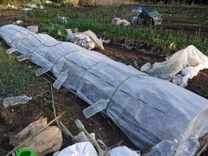 防霜対策して例年より早くジャガイモ植え付け2・17_c0014967_10364559.jpg
