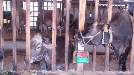 牛を見に東へ_f0228680_904176.jpg