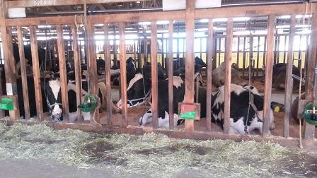 牛を見に東へ_f0228680_911633.jpg