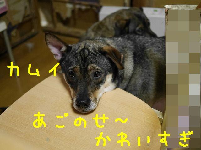 f0282319_21552443.jpg
