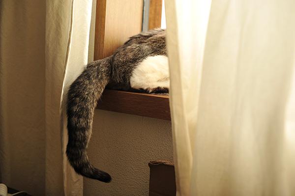 体重3.3kg&薬増加2分の1→4分の3錠、T4は7.9猫の透明な目ダレ_b0162726_12282765.jpg
