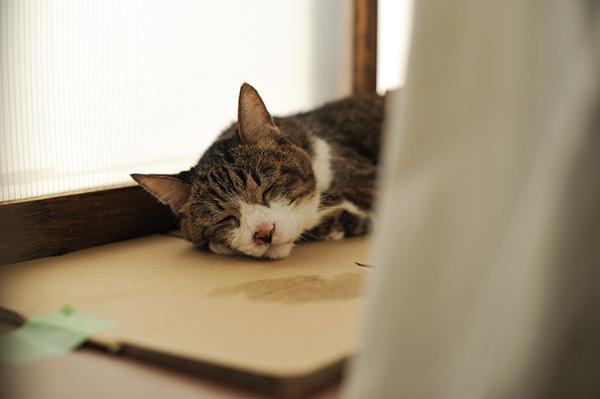 体重3.3kg&薬増加2分の1→4分の3錠、T4は7.9猫の透明な目ダレ_b0162726_12283721.jpg