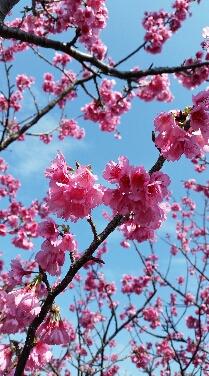 昼は桜、夜は家風呂_b0124144_954295.jpg