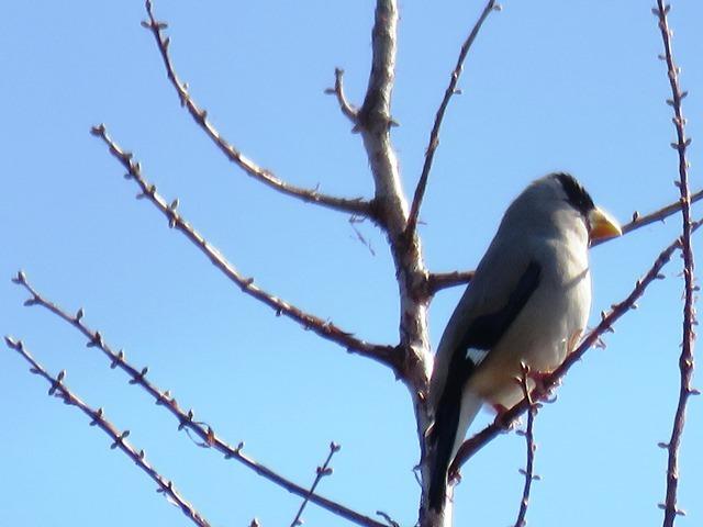 野鳥トレ44 神戸森林植物園_b0227552_20204326.jpg