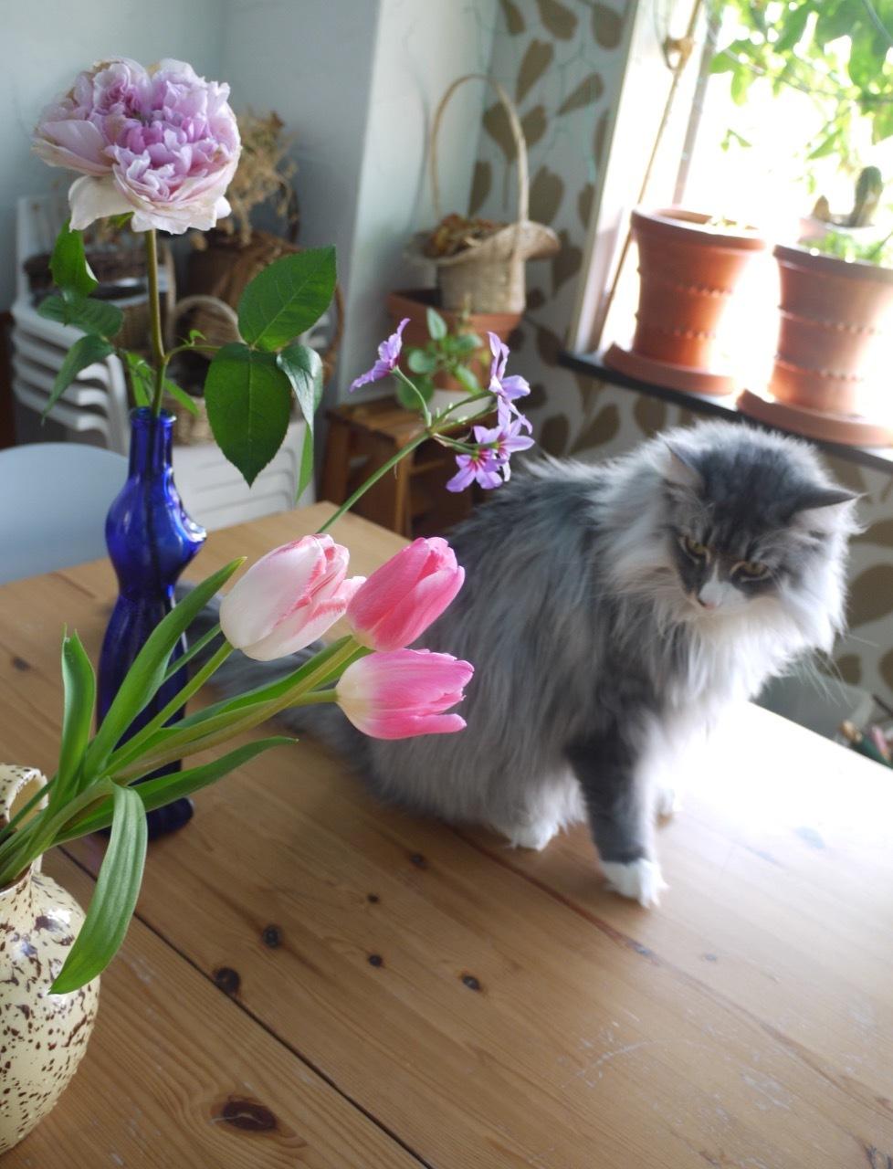お花が友達ウーラちゃん!_e0356356_12094131.jpg