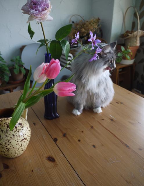 お花が友達ウーラちゃん!_e0356356_12110333.jpg