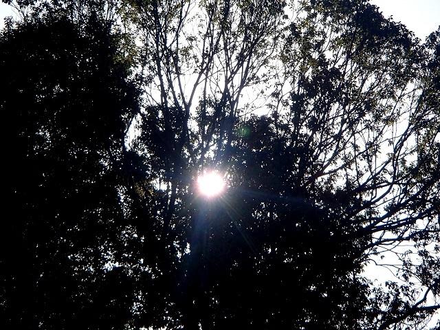 今日は早起きして 暖かかった。 (元気です)_d0105967_17394730.jpg