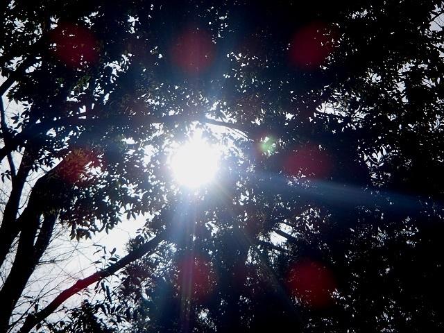 今日は早起きして 暖かかった。 (元気です)_d0105967_17431840.jpg