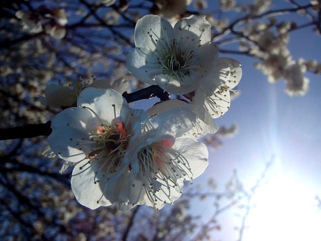 今日は早起きして 暖かかった。 (元気です)_d0105967_17512748.jpg