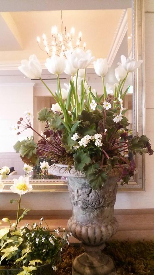 宮崎の花たちも銀座へ・・・・2月19日〜26日_b0137969_05573326.jpeg