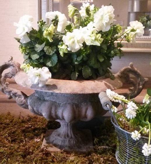 宮崎の花たちも銀座へ・・・・2月19日〜26日_b0137969_05593942.jpeg