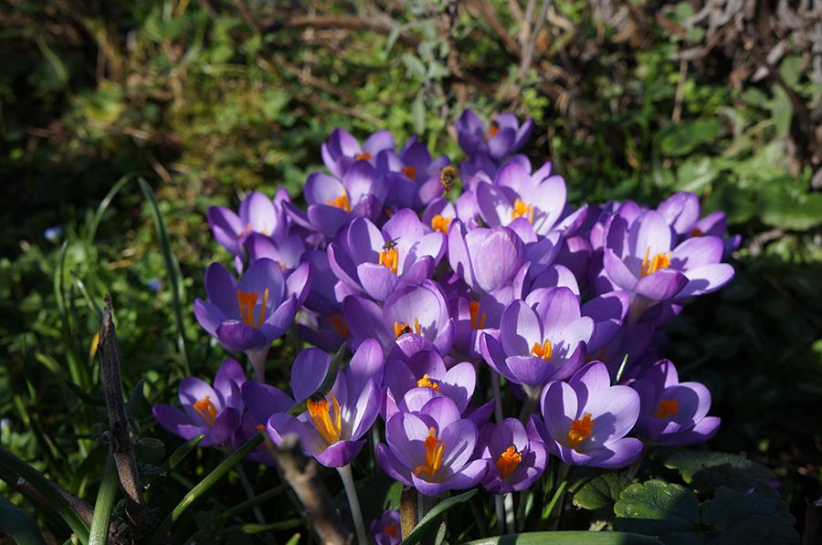 お庭に花束_f0106597_00311297.jpg