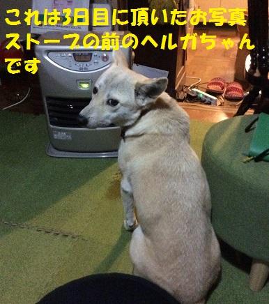 f0121712_22175442.jpg