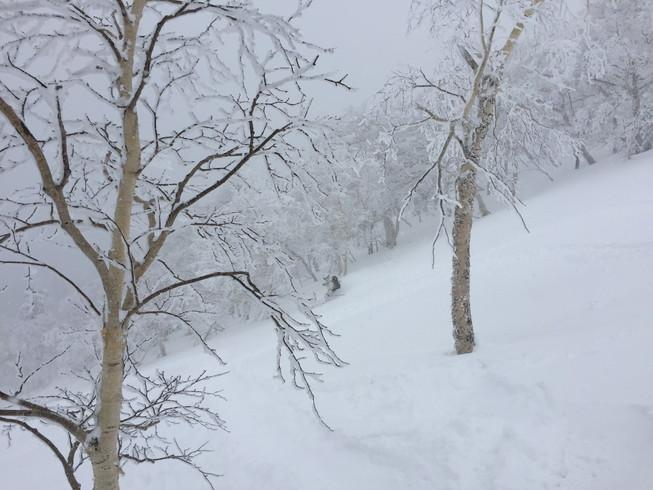 """2016年2月 『パウダースノーの聖地、北海道』 February 2016 \""""Sanctuary of Powder Snow in the World\""""_c0219616_2072344.jpg"""