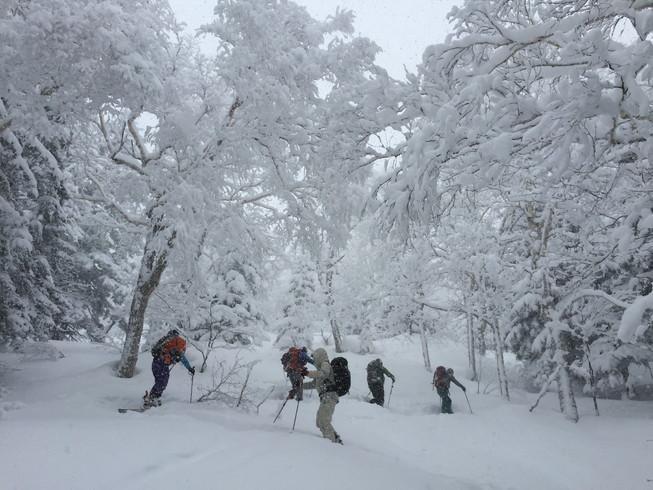 """2016年2月 『パウダースノーの聖地、北海道』 February 2016 \""""Sanctuary of Powder Snow in the World\""""_c0219616_20732.jpg"""
