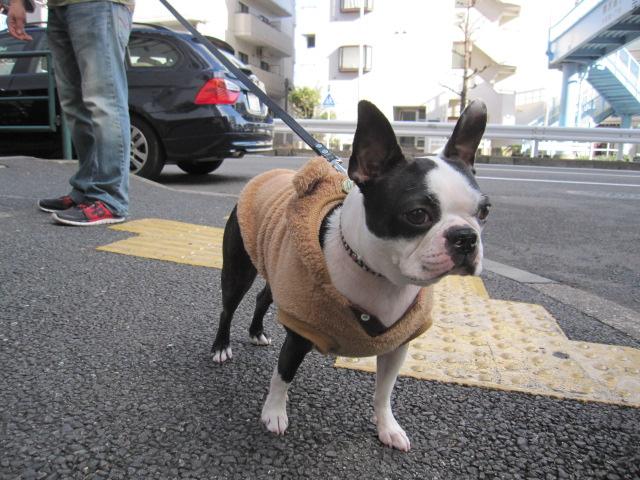 Bambiちゃん_c0151934_21234092.jpg