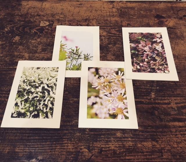「微花」トークイベント「名ざせない植物との距り」開催_c0328441_17105091.jpg