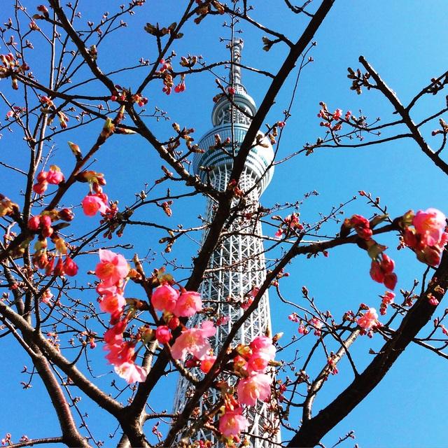 東京出張アルバム。_b0125443_9542783.jpg